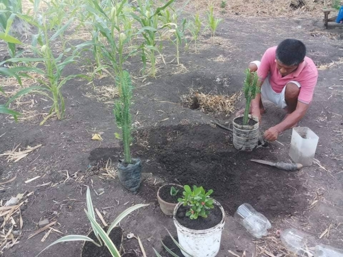 Family garden: Source of food and extra income amid COVID-19